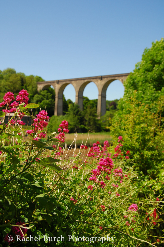 Calstock Viaduct Cornwall