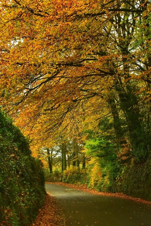 Lane near Lydford November 2019