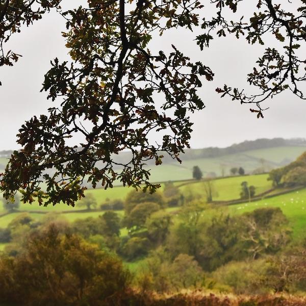 View near Brentor, October 2017