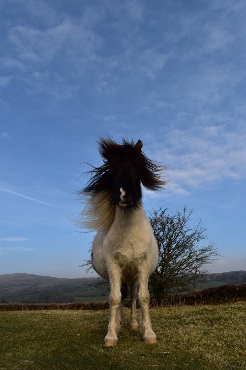 Bad hair day pony, February 2017