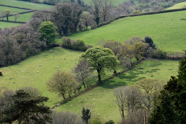 Fields near Brentor, April 2017