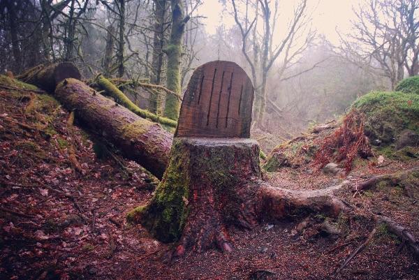 Wooden seat Burrator woods