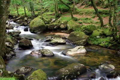 River Plym, Shaugh Prior, Devon