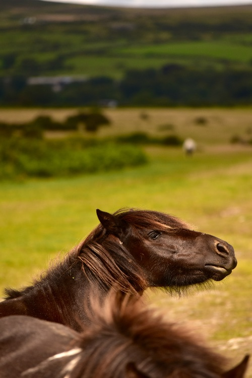 Pony, Plasterdown August 2017
