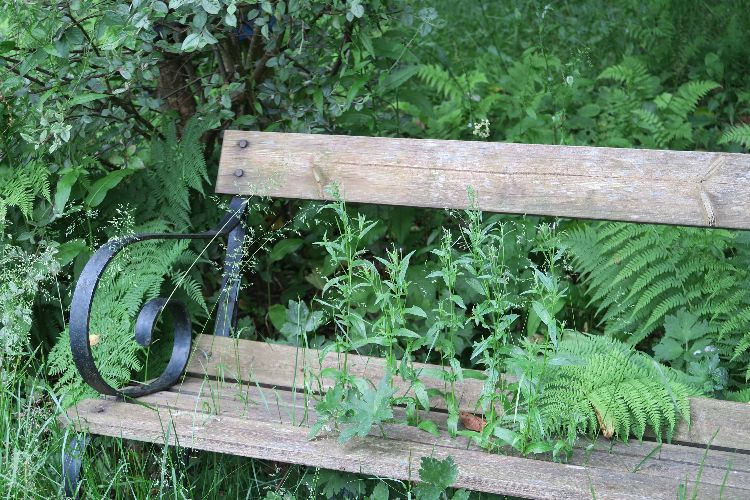 Bench in Tavistock's quaker cemetery June 2016
