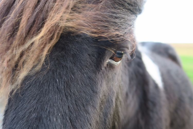 Dartmoor Pony December 2015