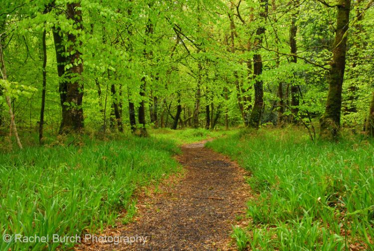 Spring woods near Meavy May 2013 Dartmoor