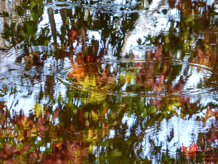 Autumn reflections, November 2014