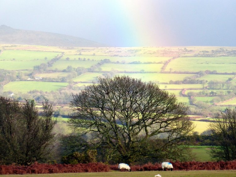 Rainbow over Whitchurch Down, Dartmoor. January 2015.