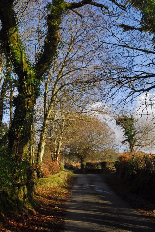 Lane at Moortown, Dartmoor Feb 2015.