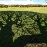 Willow shadow, Plasterdown, Dartmoor. Feb 2016.