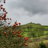 Winter berries and Brent Tor, Dartmoor December 2014.