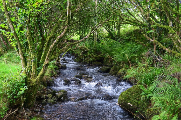 Stream near Creason woods, Dartmoor Devon, 2015.