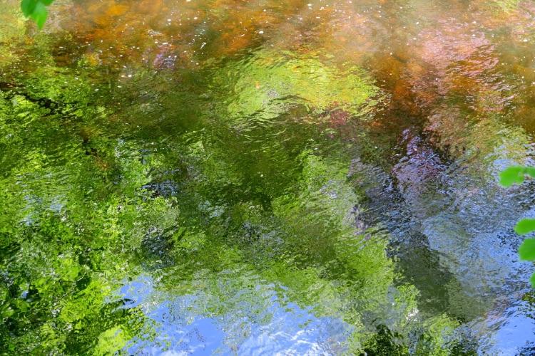 Reflection in the river Tavy, Tavistock.