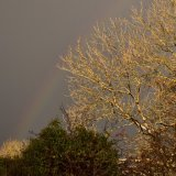 November rainbow near Whitchurch down