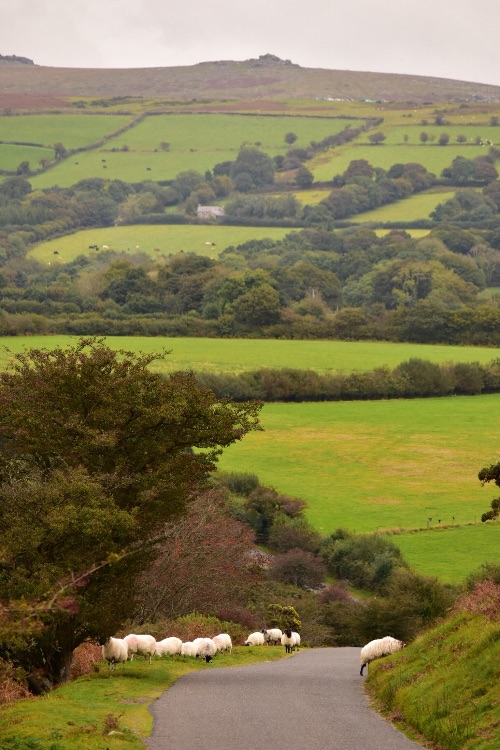 View near Whitchurch down, Dartmoor, October 2016