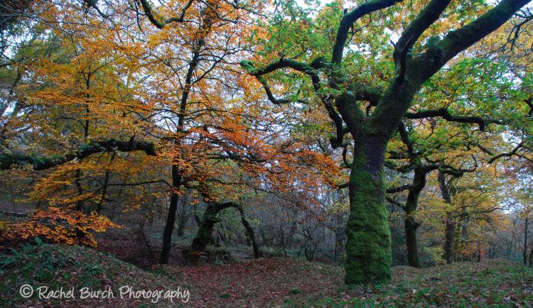 Autumn in the Walkham Valley West Devon