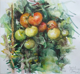 Tomatoes ripening [watercolour]