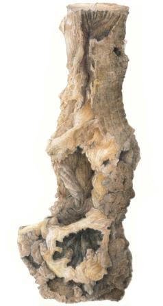 knotty ash