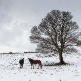 Tram Horses' Winter Break