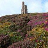 Milner's Tower