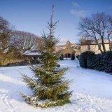 Maughold Christmas Tree