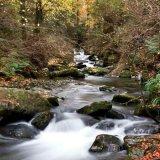 Autumn in Ballaglass Glen (portrait)