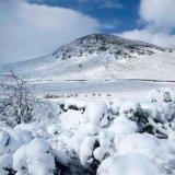 Snowy North Barrule