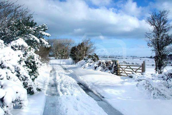 Hibernia Snow