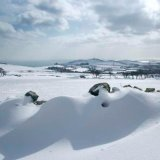 Snowy Maughold from Hibernia