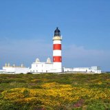 Point of Ayre Gorse