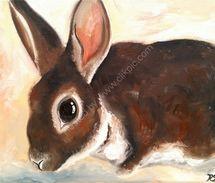 Rex rabbit drinking