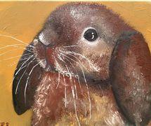 Binky the lop rabbit