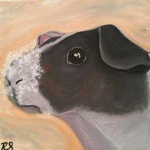 Skinny pig (guinea pig)