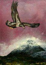 Sea eagle in the highlands