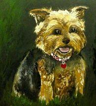 Meg the yorkshire terrier