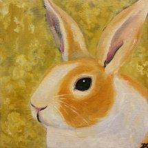 Polly the yellow Dutch rabbit