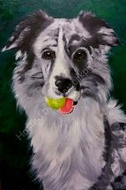 Gower the Australian sheepdog with his ball
