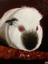 Muriel the himilayan guinea pig