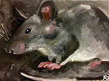 Charlie Brown the pouched rat