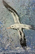 Albie the wandering albatross