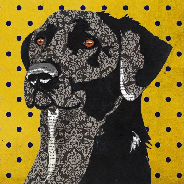 Black Labrador - Animal Collage by Clare Thompson