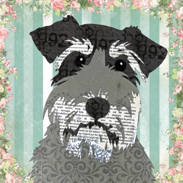 Schnauzer - Animal Collage by Clare Thompson