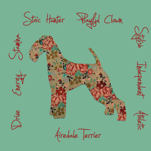 Airedale Terrier Dog Breed Traits Print