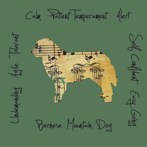 Bernese Mountain Dog Dog Breed Traits Print