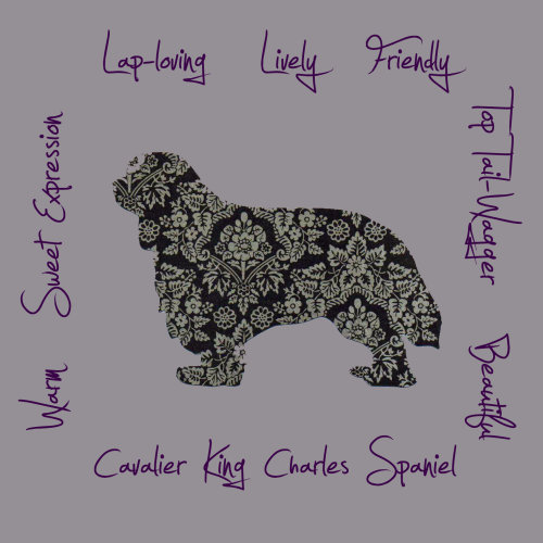 Cavalier King Charles Spaniel Dog Breed Traits Print