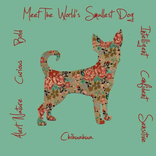 Chihuahua Dog Breed Traits Print