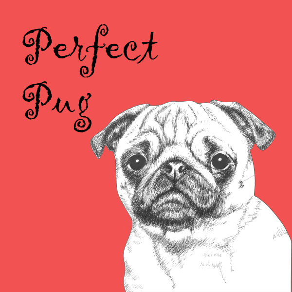 Perfect Pug Dog Breed Print by Clare Thompson