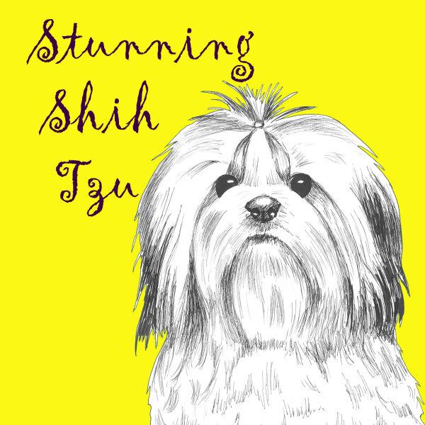 Stunning Shih Tzu Dog Breed Print by Clare Thompson
