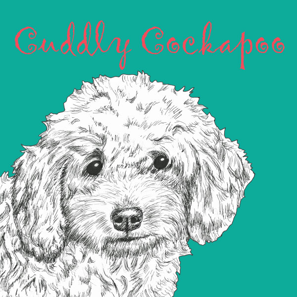 Cuddly Cockapoo Dog Breed Print by Clare Thompson